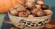 انواع میوه بلوط ؛ آیا می دانید چند نوع میوه بلوط وجود دارد