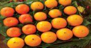 انواع پرتقال ؛ معرفی و آشنایی با خواص انواع پرتقال