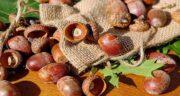 بلوط برای معده ؛ درمان ناراحتی های معده با خوردن میوه بلوط