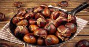 بلوط چیست ؛ آیا می دانید میوه بلوط چیست و چه خواصی دارد