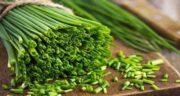 خواص برگ پیازچه ؛ خاصیت درمانی و کاربردهای برگ پیازچه در غذا