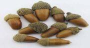 خواص بلوط لرستان ؛ میوه بلوط مخصوص جنگل های لرستان چه خواصی دارد