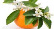خواص بهار نارنج خشک شده ؛آیا باعث تحریک سلول های پوستی می شود؟