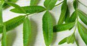 خواص به لیمو و بابونه ؛ به لیمو ضد التهاب و بهبود هضم