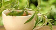 خواص به لیمو و چای سبز ؛جلوگیری از آسیب های عضلانی در طول ورزش