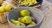 خواص به و سیب ؛ سلامت دستگاه گوارش و خون