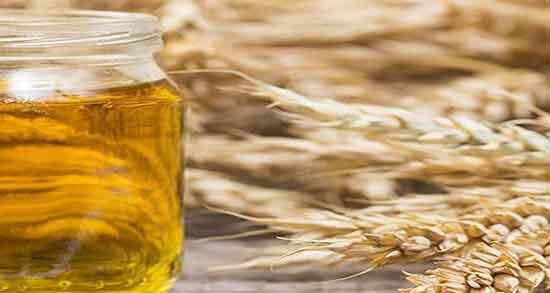 خواص جوانه گندم و عسل ؛ فواید درمانی مصرف جوانه گندم با عسل