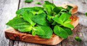 خواص ریشه پونه ؛ فواید مصرف ریشه پونه برای تقویت سلامتی