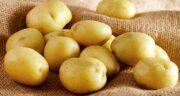 خواص سیب زمینی برای پوست و مو ؛ فواید سیب زمینی برای سلامت پوست و مو