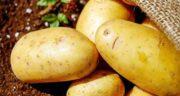 خواص سیب زمینی برای کودکان ؛ سلامت دستگاه گوارش کودکان با سیب زمینی