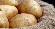 خواص سیب زمینی و آبلیمو برای پوست ؛ ماسک سیب زمینی برای جوانسازی پوست
