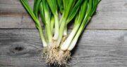 خواص پیازچه و تره ؛ فواید بسیار زیاد خوردن سبزی پیازچه و تره