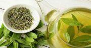 خواص چای سبز برای کبد چرب ؛ فواید درمانی چای سبز برای بیماری کبد چرب