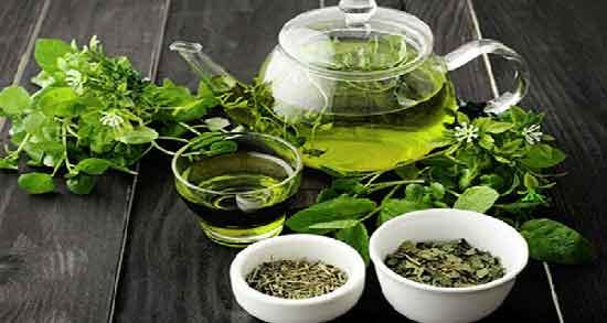 خواص چای سبز در طب سنتی ؛ خاصیت لاغر شدن و آرامش بخشی با چای سبز
