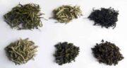 خواص چای سبز و سیاه ؛ بررسی و مقایسه خواص چای سیاه با چای سبز