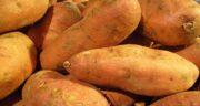 سیب زمینی شیرین چیست ؛ معرفی فواید و کاربردهای سیب زمینی شیرین