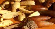 طریقه مصرف بلوط ؛ از میوه بلوط تازه چطور باید استفاده کرد