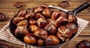 عکس بلوط خوراکی ؛ مشخصات ظاهری بلوط خوراکی چگونه است