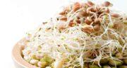 غذا با جوانه ماش ؛ معرفی چند نوع غذای خوشمزه با جوانه ماش