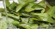 فواید برگ بو در آشپزی ؛ ادویه و طعم دهنده ای عالی برای آشپزی با برگ بو