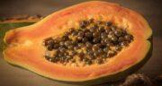فواید پاپایا چیست ؛ پاپایا منبع غنی آنتی اکسیدان برای تقویت ایمنی بدن