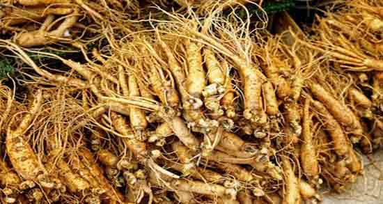 مضرات جینسینگ هندی ؛ عوارض خوردن جینسینگ هندی برای بدن