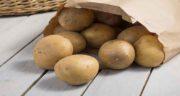 مضرات سیب زمینی خام ؛ خوردن سیب زمینی به صورت خام و نپخته چه ضرری دارد