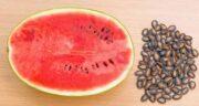 مضرات هندوانه دیم ؛ از نظر خواص هندوانه دیمی چه تفاوتی با هندوانه معمولی دارد