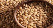 میزان پروتئین جوانه جو ؛ بررسی ارزش غذایی و پروتئین موجود در جوانه جو