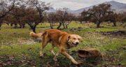 بلوط برای سگ ؛ آیا خوردن میوه بلوط برای سگ ضرر دارد است یا مفید است