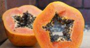 میوه پاپایا در کجا یافت می شود ؛ در کدام مناطق میوه پاپایا وجود دارد