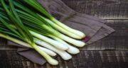 نام علمی پیازچه ؛ آیا می دانید نام علمی سبزی پیازچه چیست؟