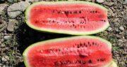 هندوانه و تری گلیسیرید ؛ کاهش تری گلیسیرید با خوردن هندوانه