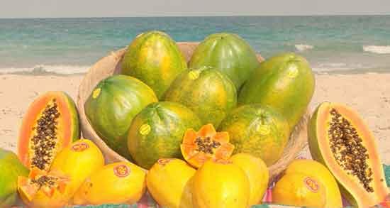 پاپایا در ایران وجود دارد ؛ میوه پاپایا با چه شرایطی در ایران پرورش داده می شود