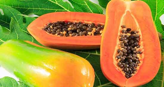پاپایا در ایران ؛ در کدام مناطق کشور ایران میوه پاپایا پرورش داده می شود