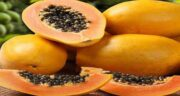 پاپایا در مشهد ؛ پرورش میوه پاپایا در شهر مشهد چگونه است؟