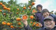 پرتقال واشنگتنی ؛ مشخصات ظاهری و خواص پرتقال واشنگتنی