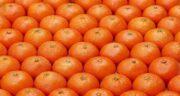 پرتقال و کرونا ؛ خاصیت درمانی خوردن پرتقال برای درمان ویروس کرونا