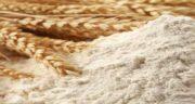پودر جوانه گندم برای چاقی ؛ روش صحیح خوردن پودر جوانه گندم برای تپل شدن