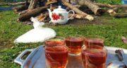 چای در طبیعت ؛ فواید خوردن چای آتشی در طبیعت