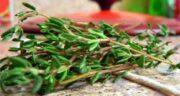 آویشن برای چی خوبه ؛ از گیاه آویشن برای چه مواردی استفاده می شود؟