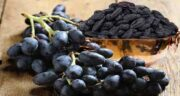 انگور سیاه و کبد چرب ؛ تنظیم فعالیت کبد و درمان کبد چرب با انگور سیاه