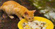 برنج برای گربه ؛ مصرف برنج برای گربه دارای خاصیت است یا ضرر دارد