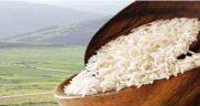 برنج هندی تراریخته است ؛ راه تشخیص برنج تراریخته از برنج اصلی