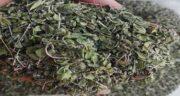 خواص آویشن و چای کوهی ؛ بررسی خواص و تاثیرات مصرف آویشن و چای کوهی