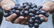 خواص انگور سیاه برای بدن ؛ کنترل قند خون و پیشگیری از سرطان با انگور سیاه