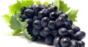 خواص انگور سیاه برای دیابت ؛ خاصیت خوردن انگور سیاه برای درمان دیابت