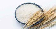 خواص برنج جنوب ؛ مشخصاوت و ویژگی های برنج جنوب چیست