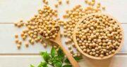 خواص دانه سویا در بدنسازی ؛ بررسی کامل پروتئین موجود در سویا برای بدنسازی