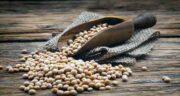 خواص دانه سویا در طب سنتی ؛ فواید درمانی استفاده از دانه سویا